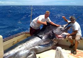 All about Marlin Fishing in Cairns